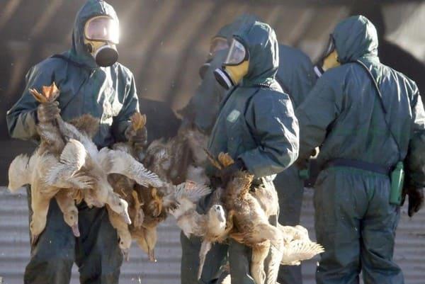 Зараженных птичьим гриппом жителей Ростовской области не обнаружено